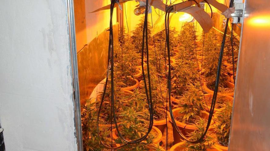 Desmantelan un cultivo de marihuana en el garaje de una casa en Molina