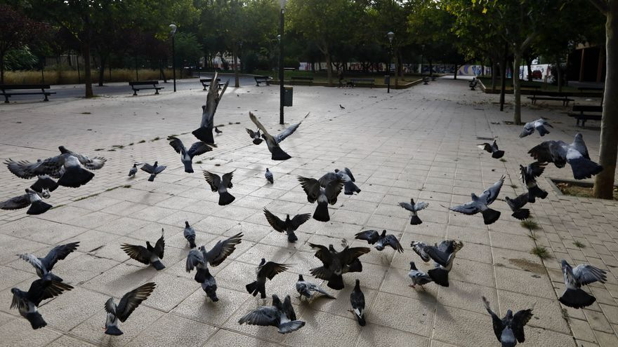 Zaragoza intensifica la captura de palomas para frenar su expansión