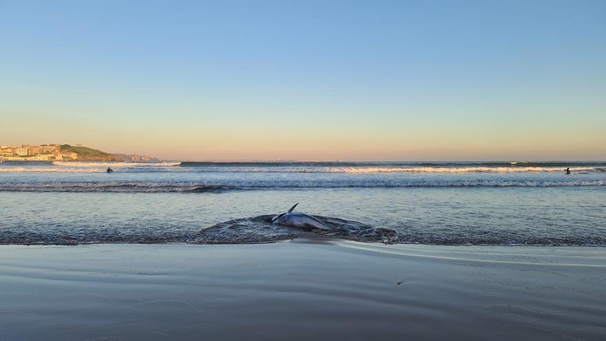 Atún muerto en la orilla de San Lorenzo