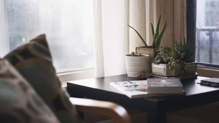 Las cuatro plantas de moda para decorar tu casa esta temporada