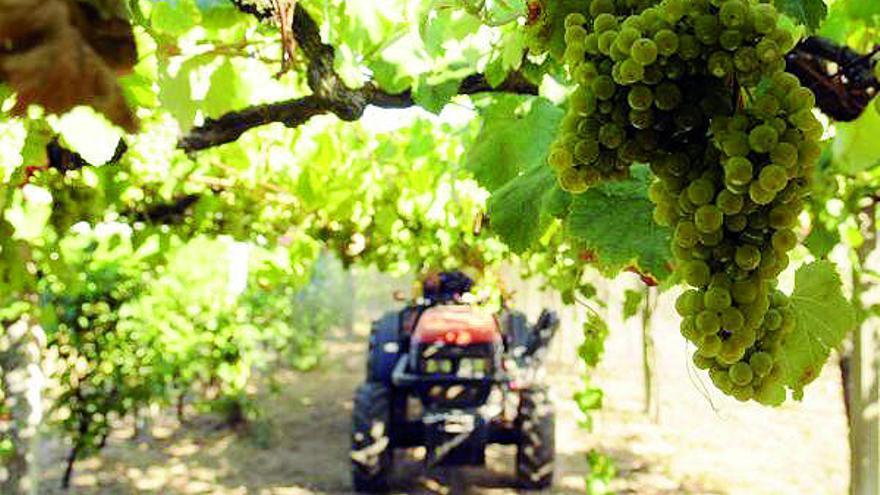 La Evega profundiza en los viñedos sostenibles