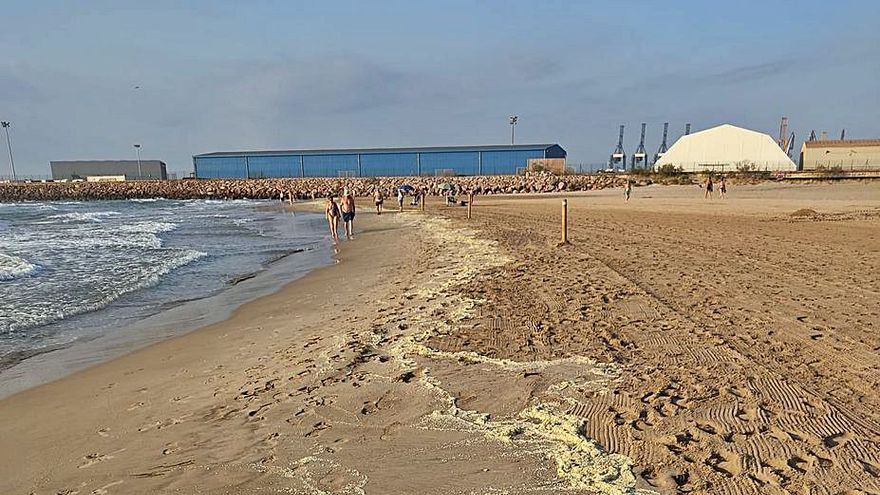 Insólitos huevos de caracol en la playa de Port