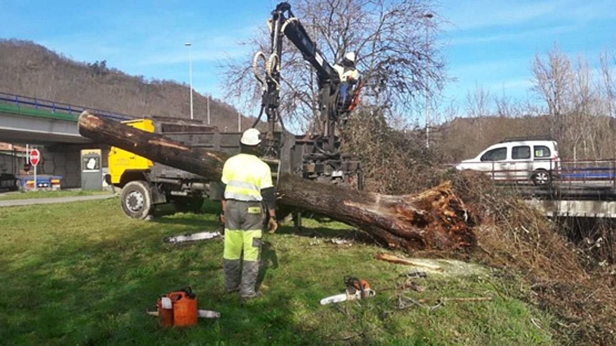 La retirada de un gran tronco en Pola de Laviana. | CHC