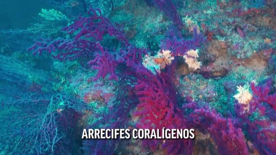 Cabrera XXL: Mallorca feiert vergrößertes Meeresschutzgebiet