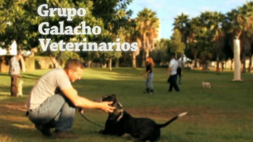 Clínica Veterinaria Galacho