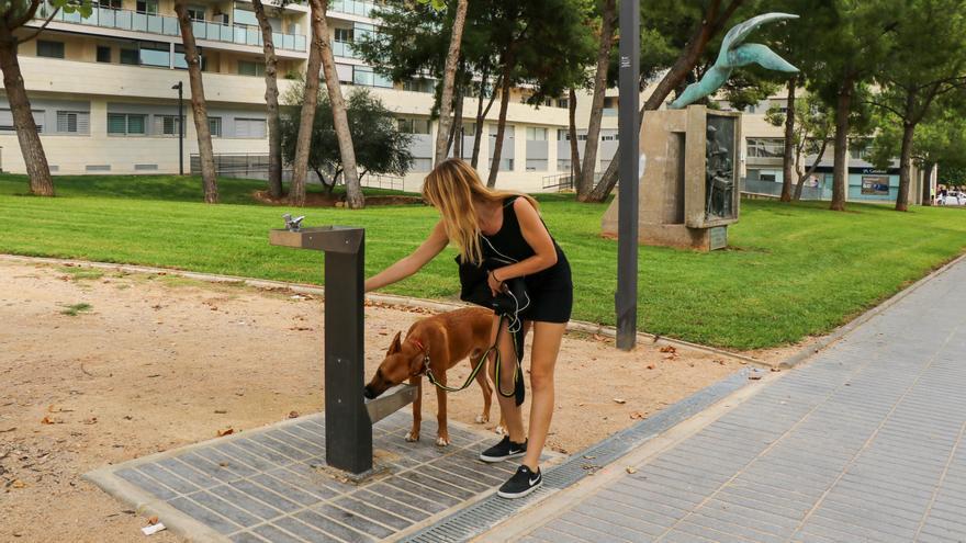 Torrent instala cinco fuentes para que beban personas y canes
