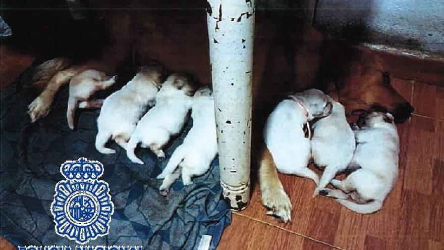 Detenida una pareja en Fuengirola por estafar en la venta de cachorros de perros