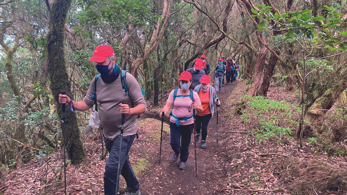 Rutas a pie por Anaga organizadas por la Fundación CEPSA