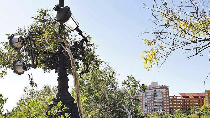 València reclama 188.470 euros por los árboles caídos en el temporal