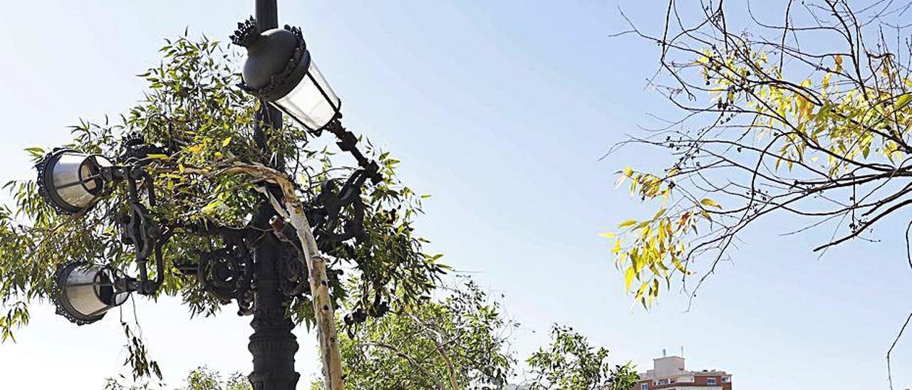 Uno de los árboles abatidos por el temporal Gloria. | LEVANTE-EMV
