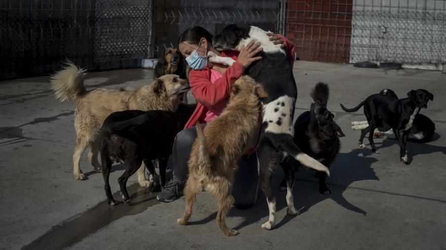 Un seguro de vida para las mascotas