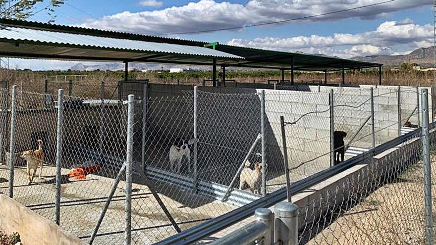 El contrato para el albergue de animales, en el aire por falta de permisos de la licitadora