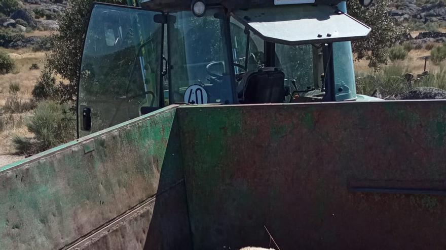 Una lobada deja doce ovejas muertas en Almeida de Sayago