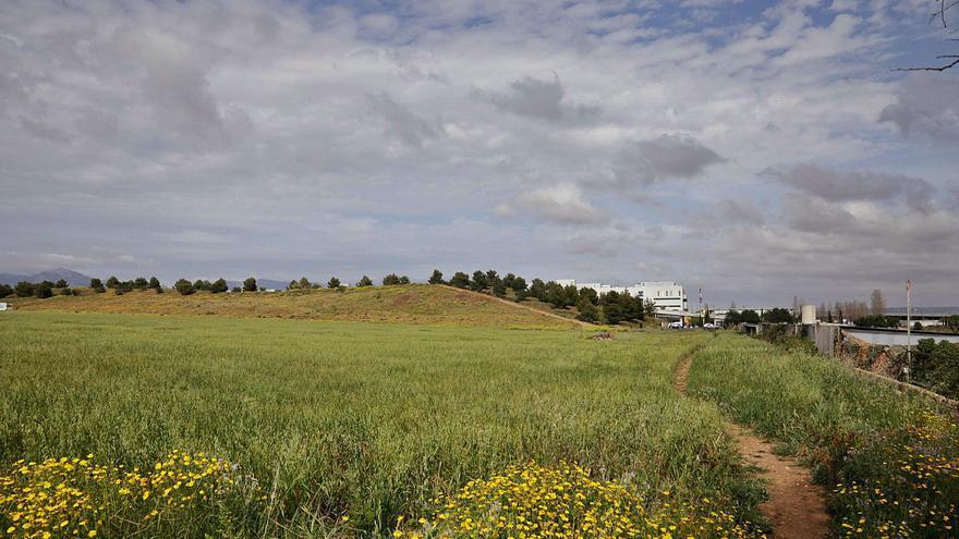 Terrenos públicos servirán para impulsar el parque agrario de Palma