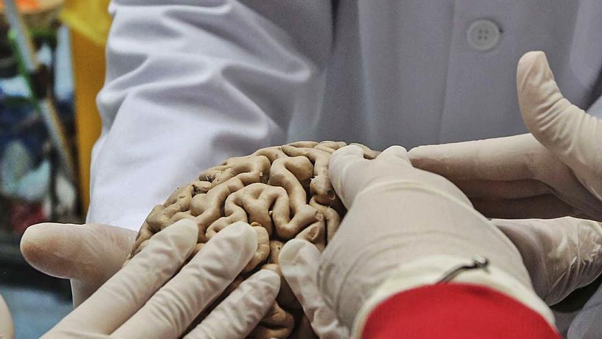 Una investigación de la UMH identifica la causa de tumores en el cerebro de los niños