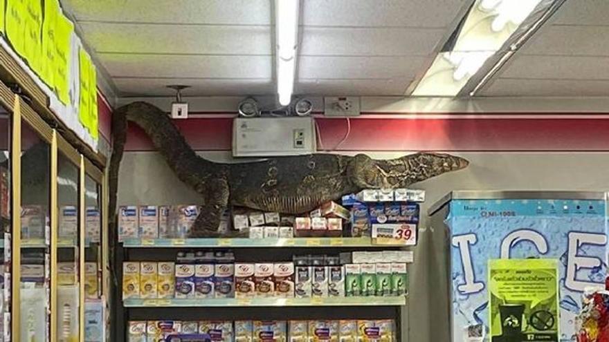 Un lagarto gigante entra a una tienda y destroza todo lo que encuentra a su paso