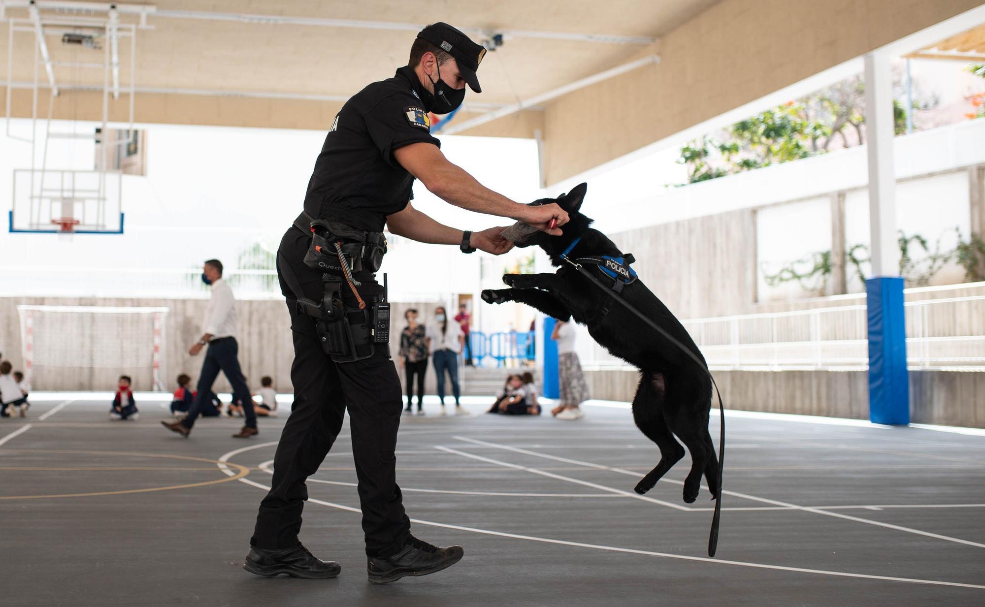 La agente Furia, Unipol