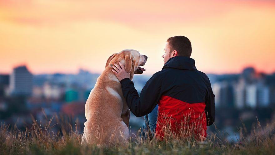 Els gossos neixen preparats per a comunicar-se amb les persones