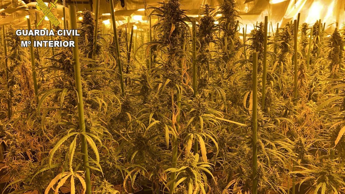 La Guardia Civil detiene a 26 personas en una macrooperación contra el tráfico de drogas.