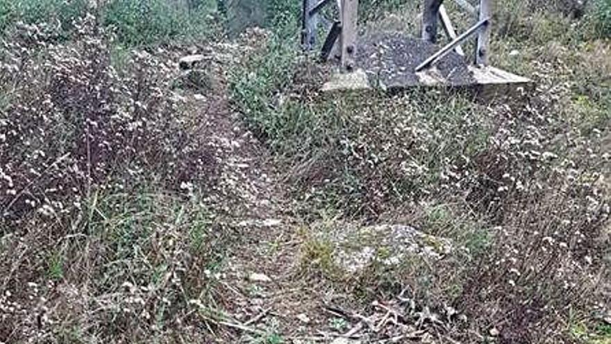 Dotze cigonyes mortes a Girona durant la tardor
