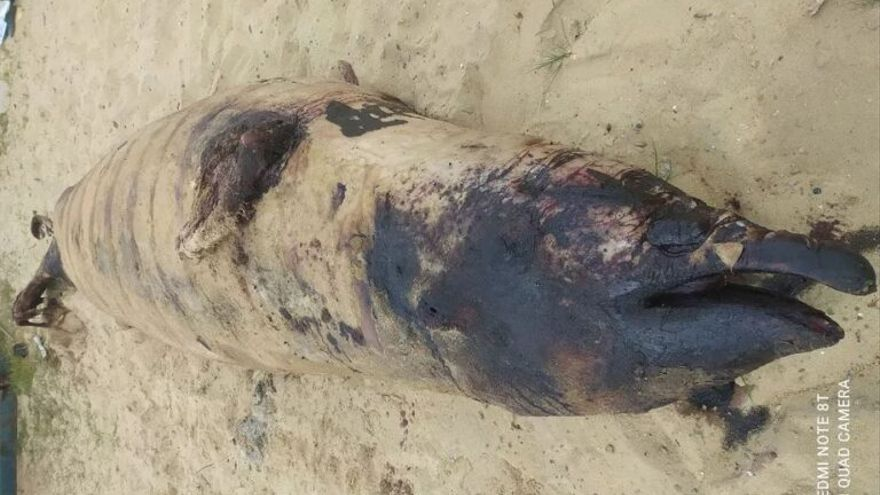 Hallan 16 kilos de plástico en el estómago de un cetáceo