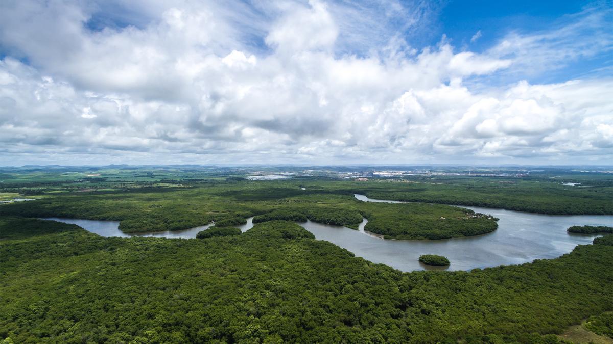 La selva del Amazonas en Brasil