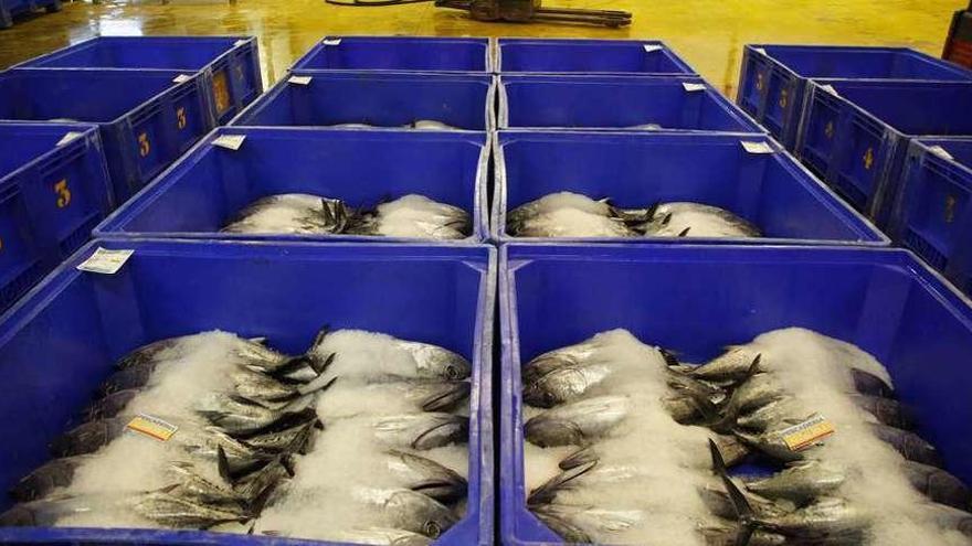 Socios de la cofradía pesquera ven indicios de irregularidades en el último proceso electoral