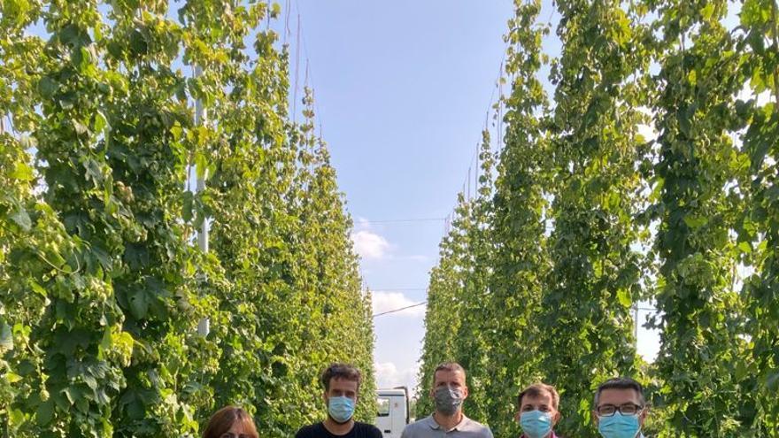 El cultivo de lúpulo alcanza las 11 hectáreas en el Noroeste