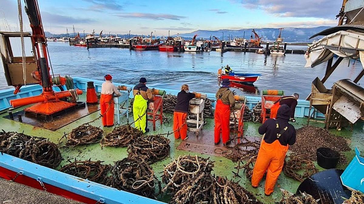 Bateeiros encordando cría a bordo de un barco amarrado en el puerto.