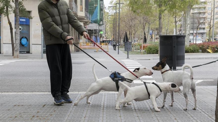 ¿Puedo pasear a mi perro después de las 22.00 horas con el toque de queda?