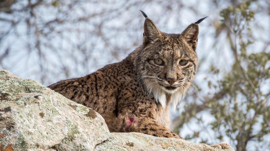 Tres especies desaparecen a la hora en el mundo