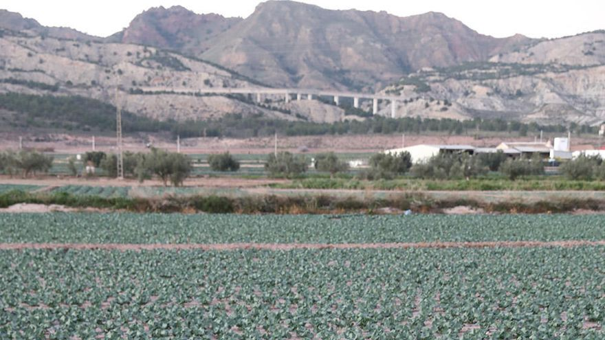 El campo necesita 90.000 trabajadores los próximos cuatro meses