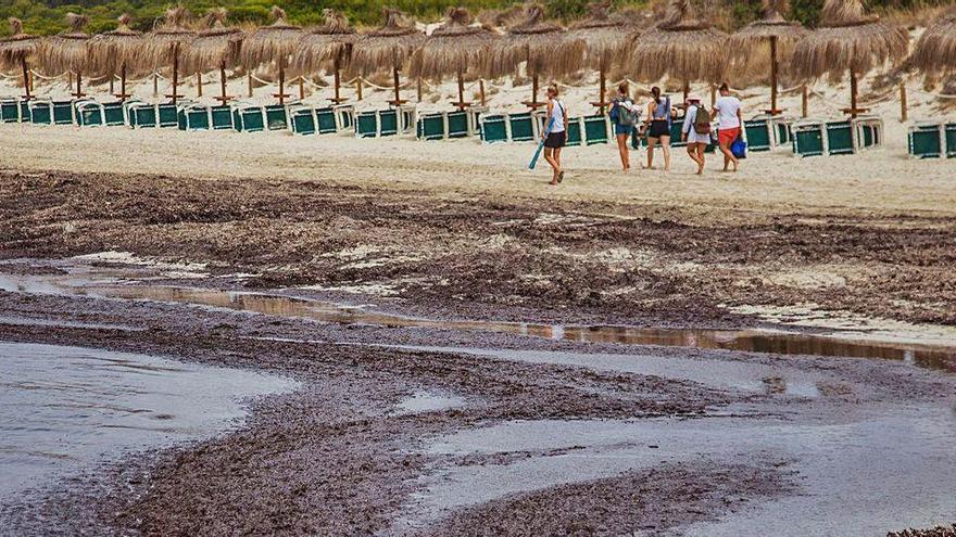 Strandregenerierung: Mallorca entsetzt über Vorschlag aus Madrid