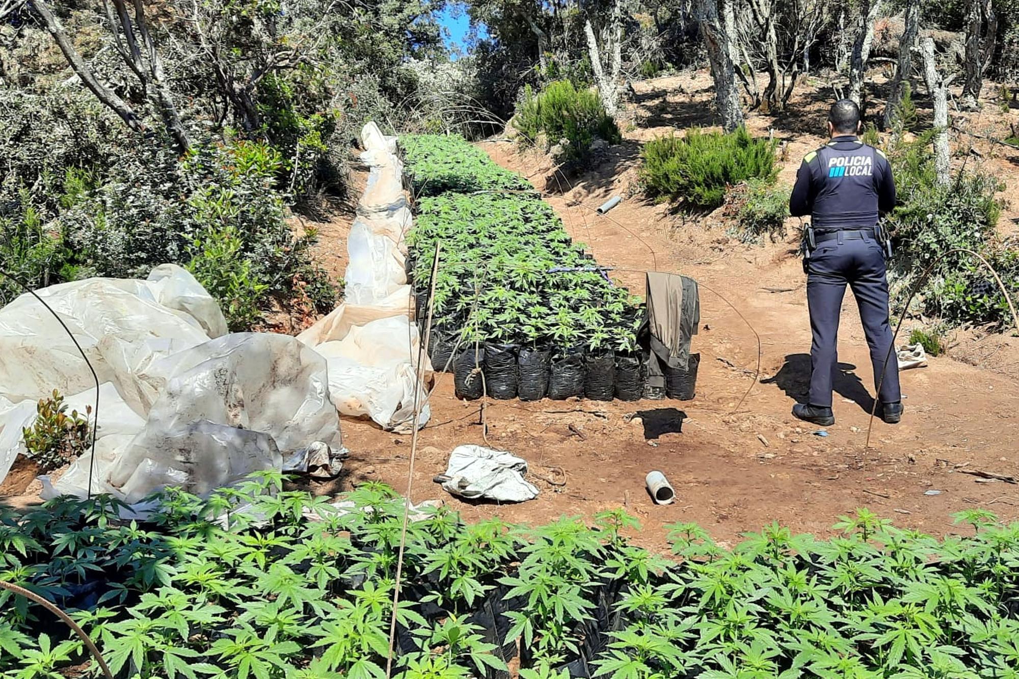 Desmantellen un cultiu de Marihuana a Vidreres
