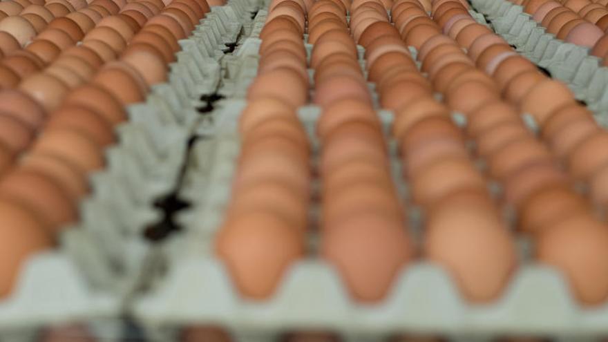 Inmovilizan 20 toneladas de huevo líquido contaminado con fipronil en Vizcaya