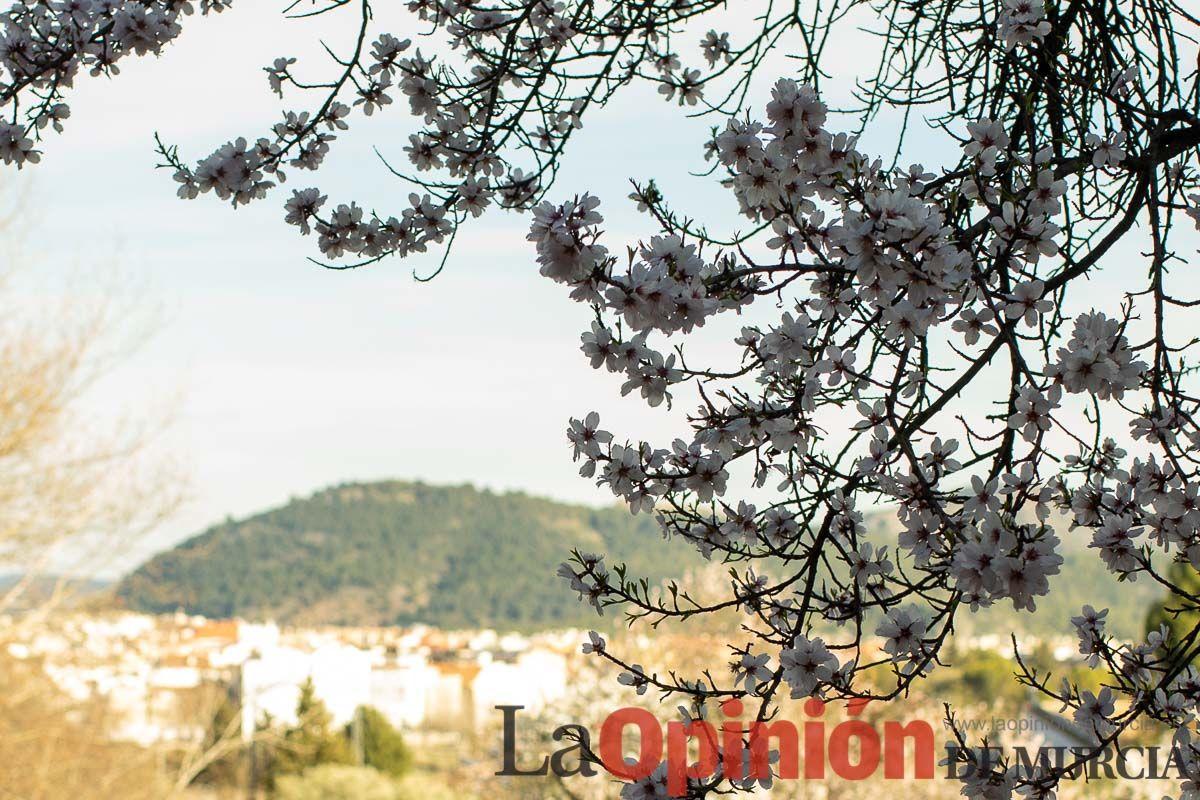 FuentesdelMarqués_Floración024.jpg