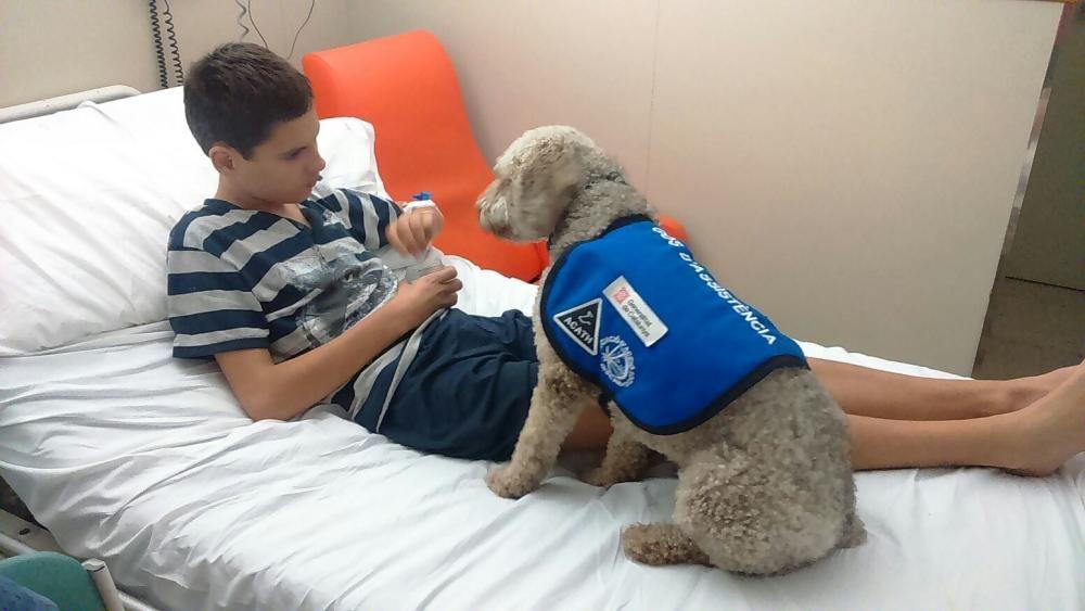 Marc i Nala a l'Hospital. Nala ha estat el primer gos acreditat a l'Estat Espanyol com a gos per a avisar de crisis epilèptiques imminents al seu usuari.  Aquesta gossa va ser entregada per ACATH i pot acompanyar al seu usuari a qualsevol lloc, segons la llei 19/2009 de gossos d'assistència.