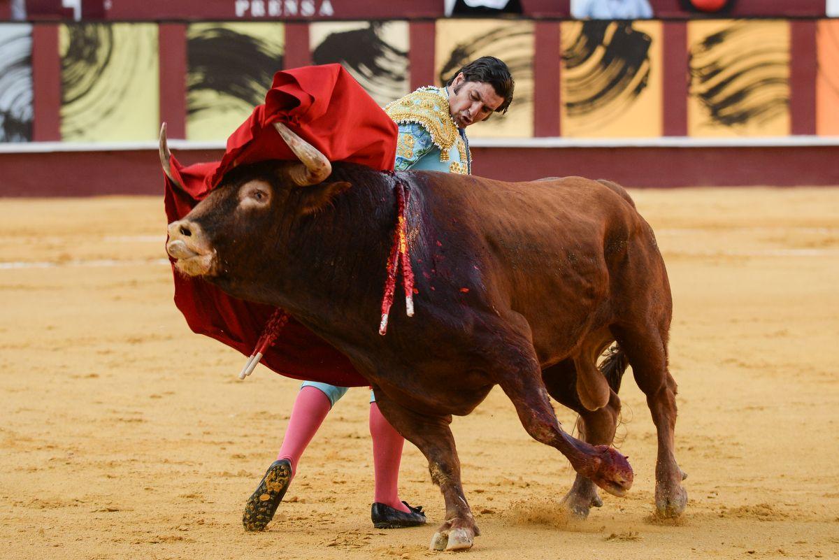 Los toros vuelven a La Malagueta