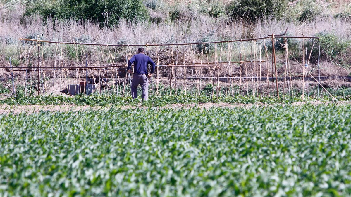 Un agricultor en una parcela