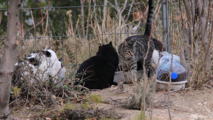 Alcoy recibe 10.000 euros de subvención de la Diputación para la esterilización de gatos callejeros