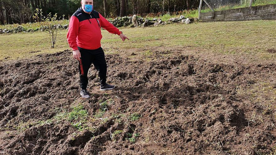 Vecinos de Viñó denuncian ataques diarios de jabalíes a sus fincas y viñedos