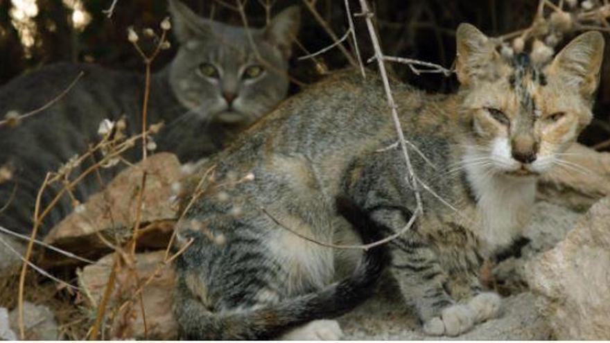 TV-Tipp: Die Straßenkatzen von Mallorca bei Vox