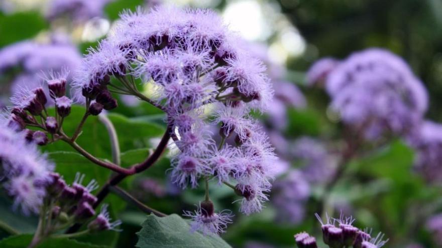 El Jardín de La Concepción, en plena floración y sin visitantes