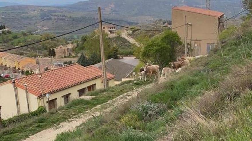 Un grupo de vecinos logró hacer recular a las vacas e impedir su entrada en el casco urbano