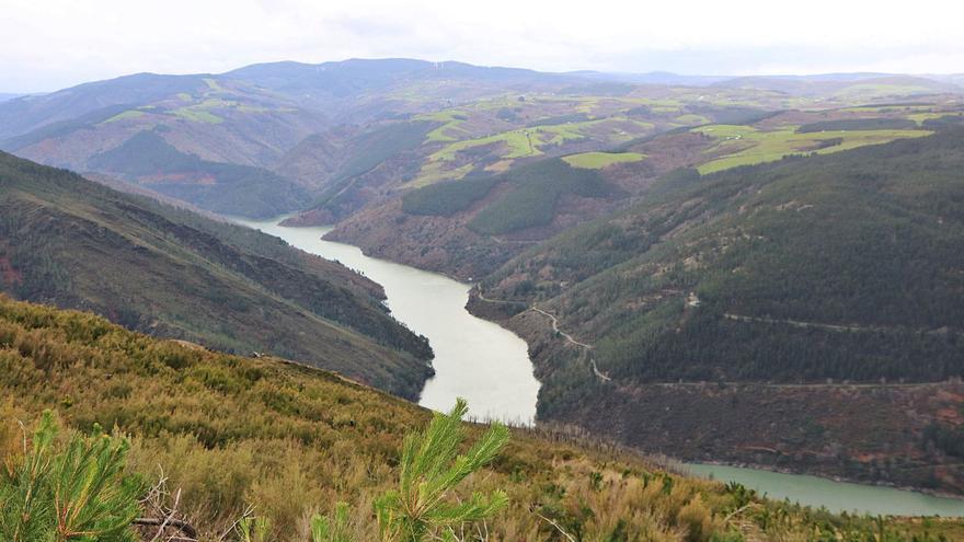 Se inicia en Grandas de Salime la reforestación a gran escala contra el cambio climático: 300 hectáreas en torno al embalse