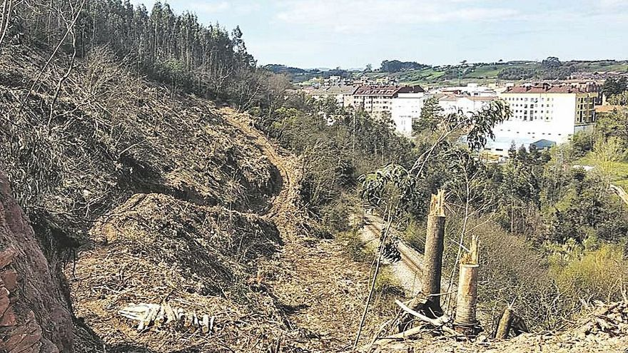 Detectada una tala ilegal en el Ventorrillo, en las inmediaciones de Piedras Blancas