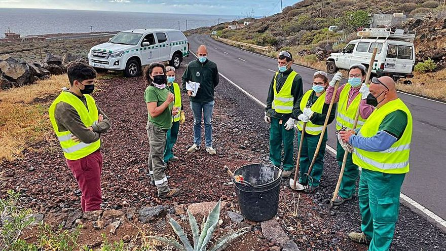 Continúan los trabajos de erradicación de especies invasoras en El Hierro