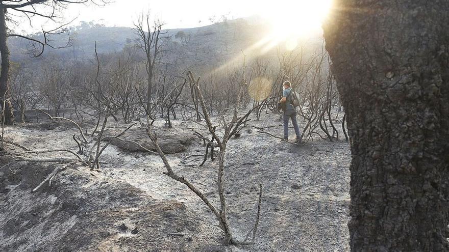 El incendio de Málaga deja a 14 especies endémicas en peligro de extinción