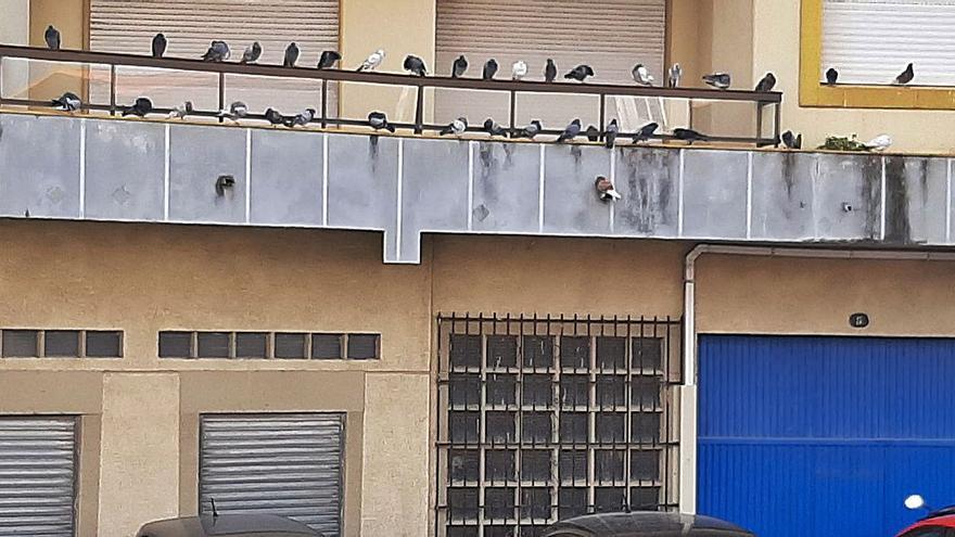 ¿Un balcón o un palomar?
