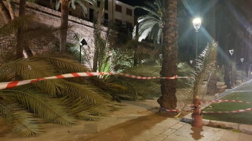 Vorsicht vor den Windböen: Palma sperrt Palmen-Boulevard vor der Stadtmauer